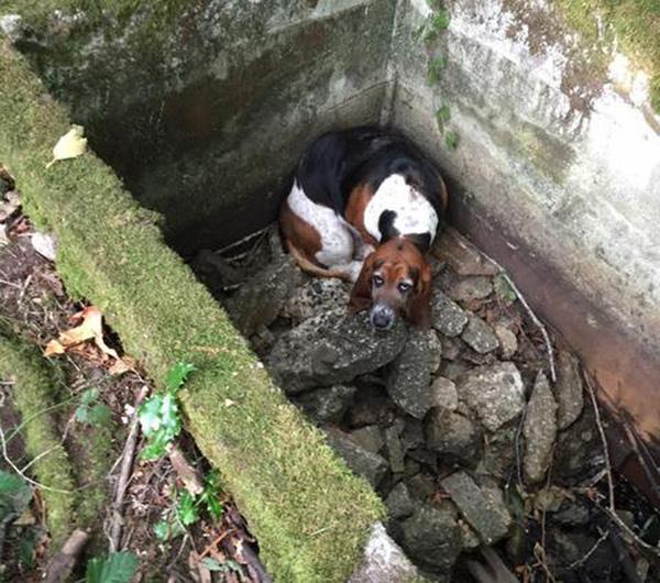 Hai chú chó nương tựa vào nhau suốt 1 tuần vì bị kẹt dưới giếng