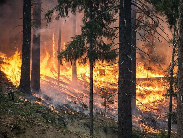 Nei prossimi decenni il rischio di incendi boschivi in area mediterranea potrebbe aumentare a causa di condizioni climatiche più aride.