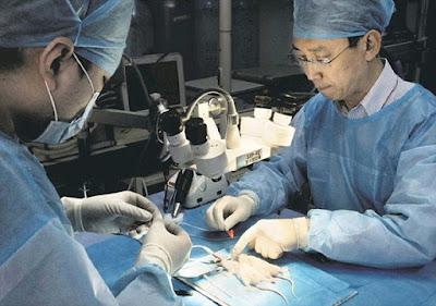 Dr. Xiaoping Ren - Sekitar Dunia Unik