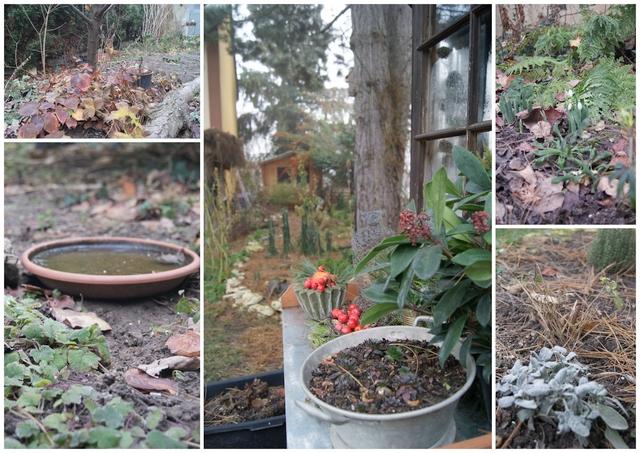 Garten im Dezember