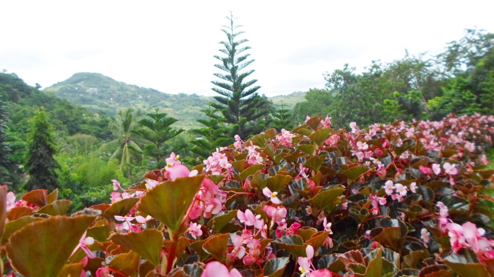 Poetic Isolation Terrazas De Flores Botanical Garden Cebu