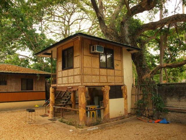 Andrea 39 s plants photos and travels april 2014 for Half concrete half wood house design