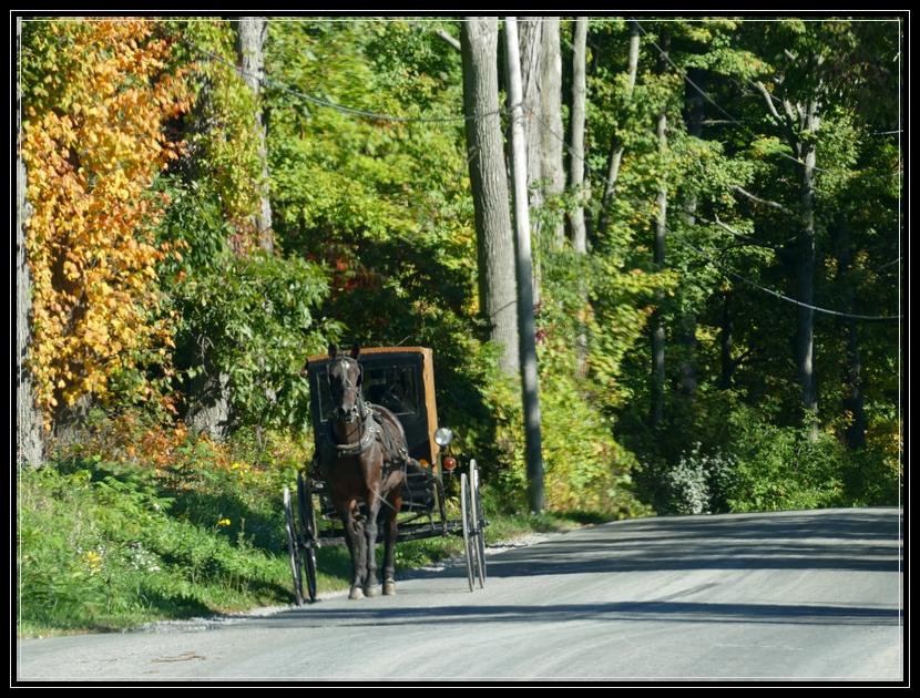Amish of NY
