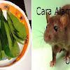 Takut Berbau Busuk STOP Mulai Sekarang Tak Perlu Diracun Lagi !! Begini Cara Mudah Mengusir Tikus dari kediaman anda!