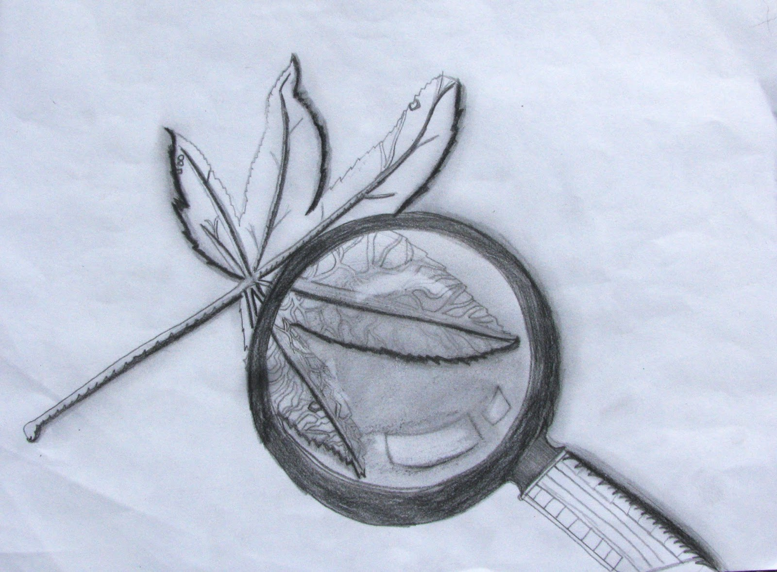 The Helpful Art Teacher: Drawing magnified leaves: Finding the details