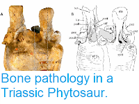 http://sciencythoughts.blogspot.co.uk/2014/01/bone-pathology-in-triassic-phytosaur.html