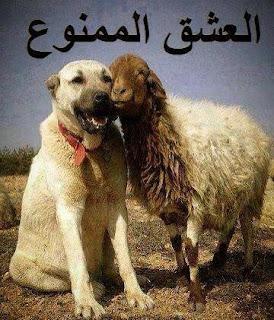 صور حيوانات مضحكة , صور مضحكة للحيوانات , صور مضحكة للفيس بوك