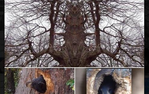 سمعوا صراخ ياتى من الشجرة وعندما اقتربو منها كانت المفاجاة صادمة !!