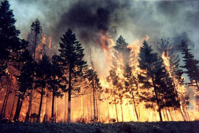 Large fire, 10 hectares of forest burned in Mirdita