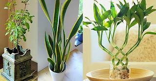 ¡9 Plantas que atraen energía positiva a tu hogar y trabajo!