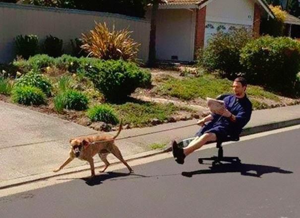 En este caso el perro sacando a pasear al dueño.