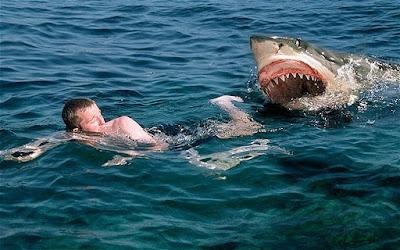 Masih terasa capeknya liburan di kepulauan Seribu Tips Mencegah & Menghindari Serangan Ikan Hiu (Shark Attacks)