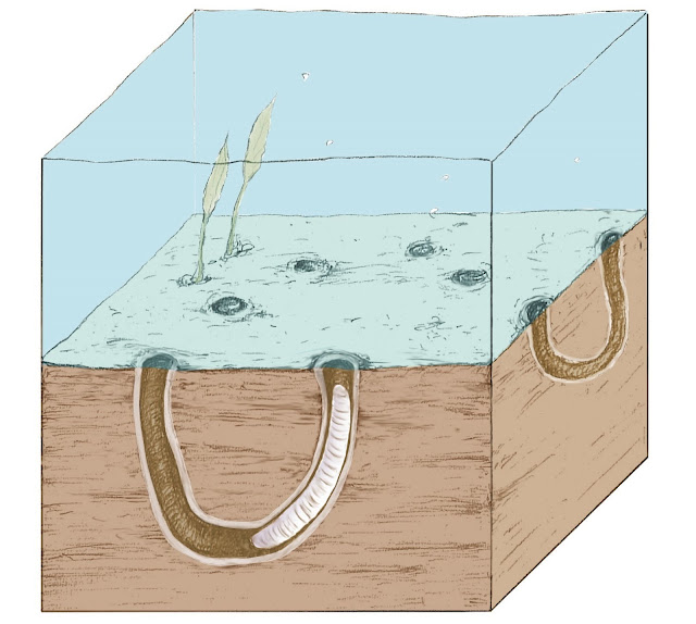 Digging up the Precambrian: Fossil burrows show early origins of animal behaviour