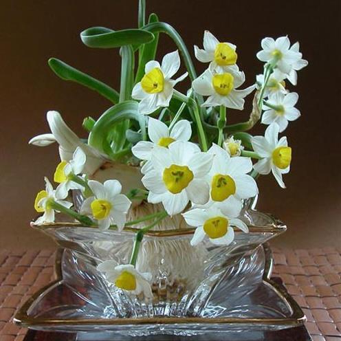 hoa thủy tiên đẹp nhất thế giới 5