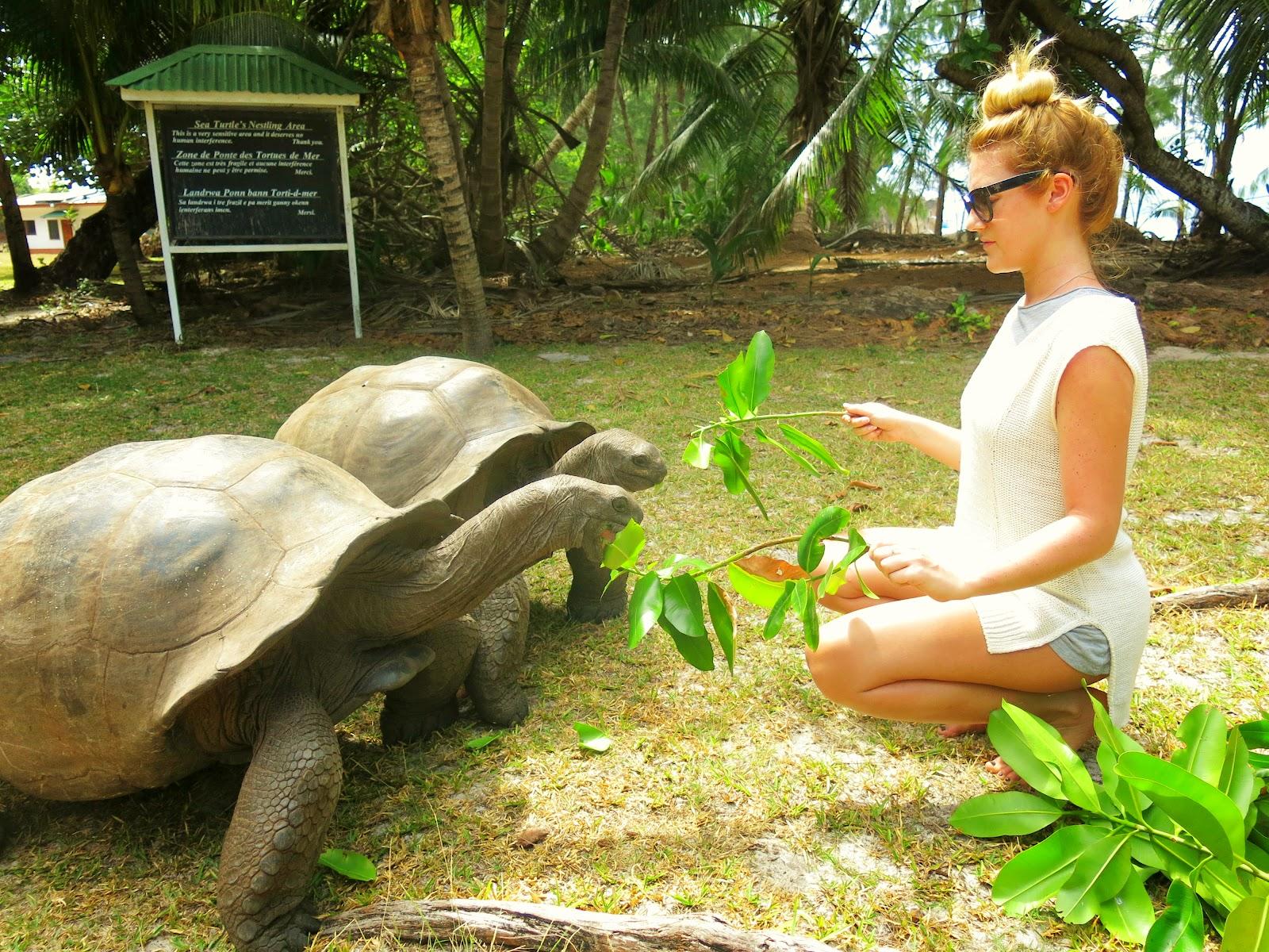 Curieuse Island på Seychellerna jättesköldpadda