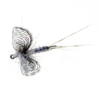 wally wing callibaetis