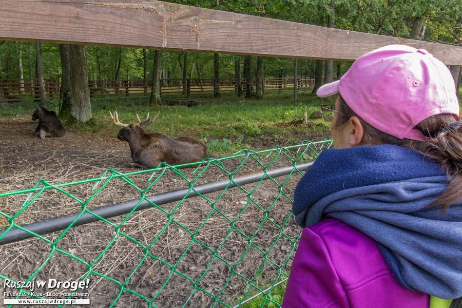 W Rezerwacie Żubrów w Białowieży