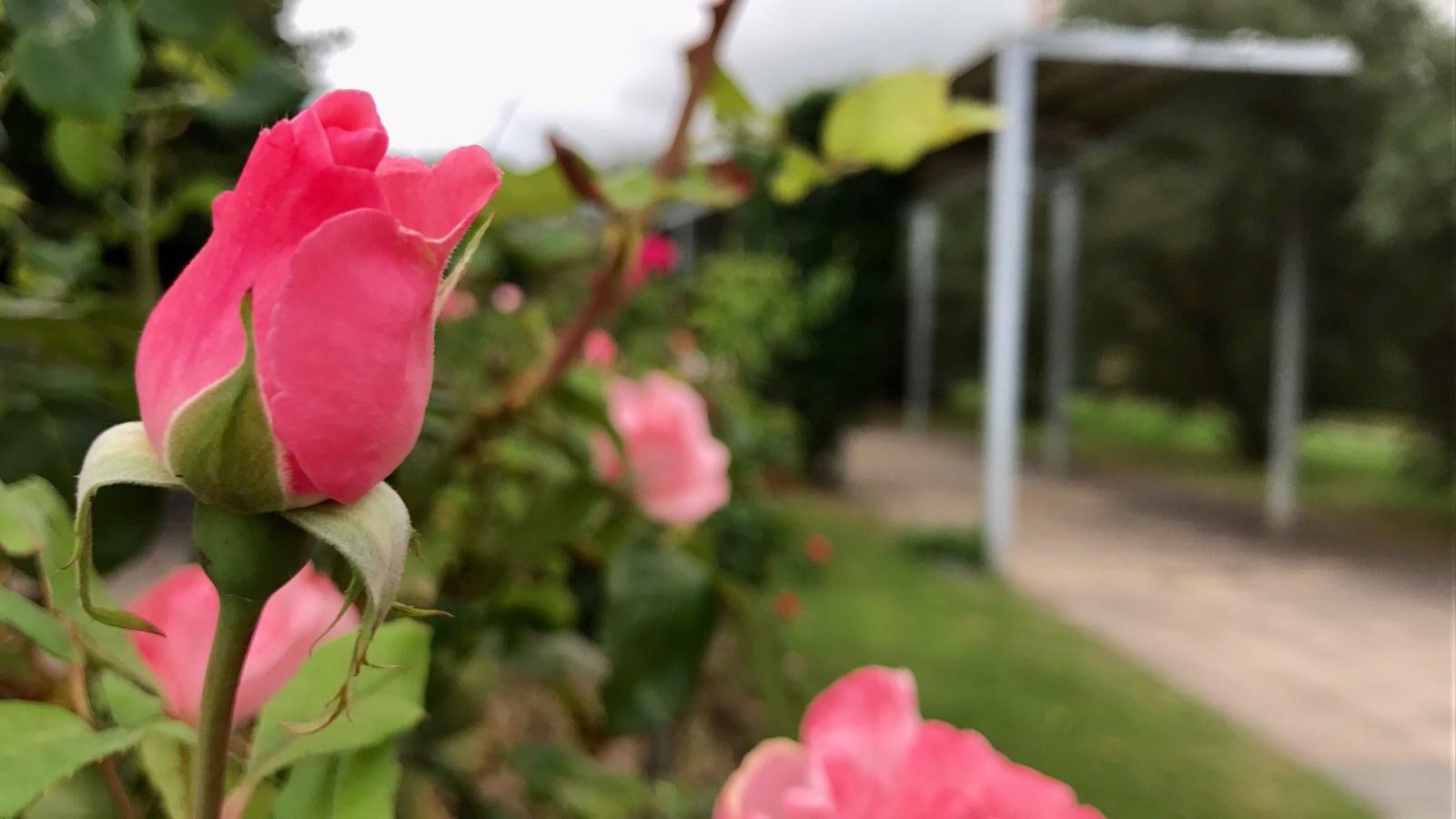 Barakaldo digital agenda retornan los recorridos for Jardin botanico tarifas