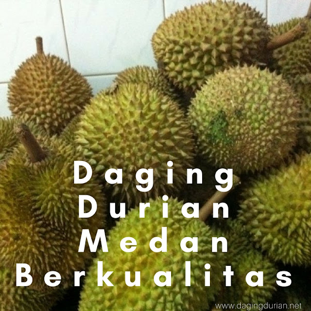 produsen-daging-durian-medan-frozen-di-amurang