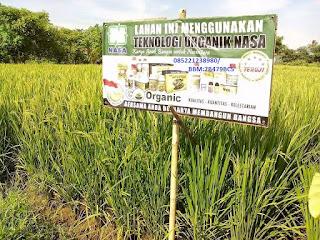 AGEN NASA DI Setia Aceh Barat Daya - TELF 082334020868