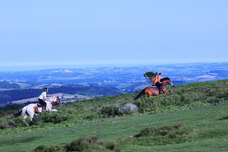 Two horses being cantered up a grass hill at the top of a mountain