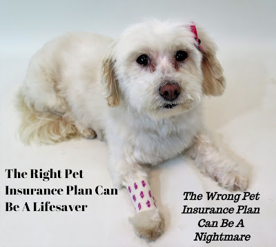 With the rising cost of Veterinary care for pets, many pet owners are buying Pet Health Insurance. The right Pet Insurance plan can be a life saver, but finding a great company & plan isn't easy.  Here are some tips for finding great Pet Insurance for dogs, cats, and other pets.  Pet Care, Pet Health,  Dog Health,  Find a Pet Insurance Plan