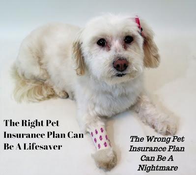 Pet health insurance, Dog health insurance, Pet insurance, Dogs, pet health