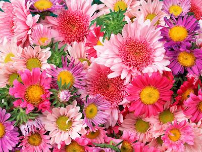 Resultado de imagen para wallpaper de flores
