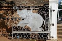 Elefanten sind überall - elephants everywhere - Jaya Sri Maha Bodhi