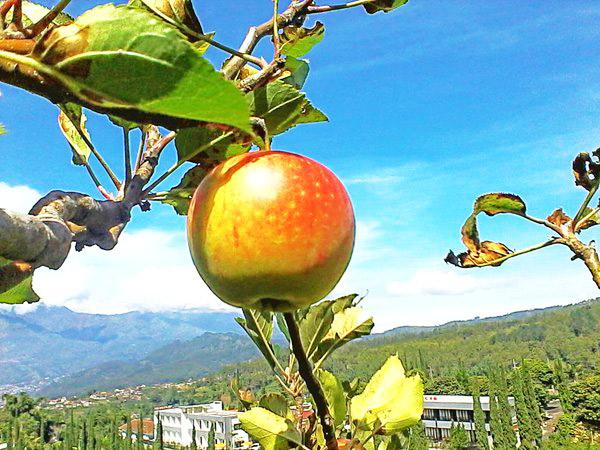 Agro Wisata Petik Apel Kelompok Tani Makmur Abadi
