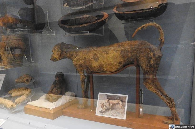 Múmias de animais no Museu do Cairo, Egito