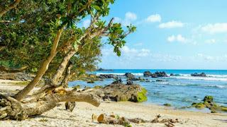 Wisata Pantai Jogja Wedi Ombo