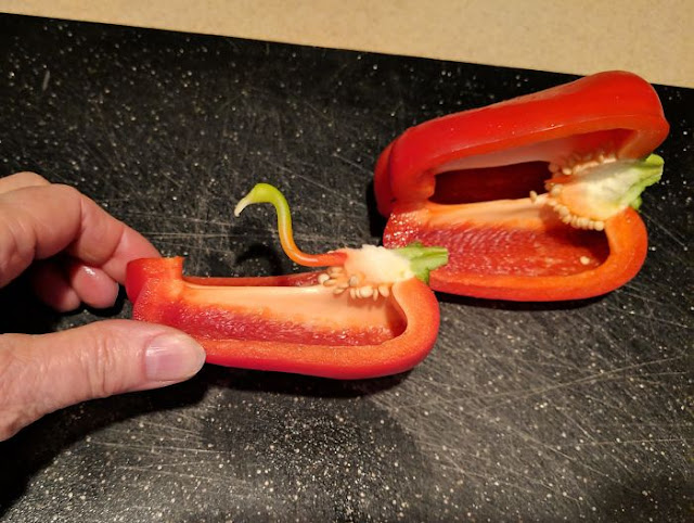 My Mom Found A Flamingo In Her Bell Pepper