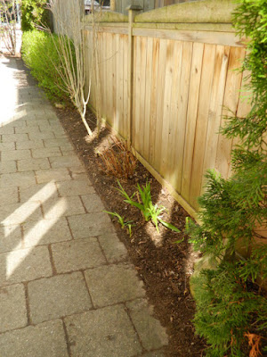 Toronto Roncesvalles spring garden cleanup after Paul Jung Gardening Services