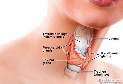 Leher ada benjolan: Tiroid biasa atau kanser?