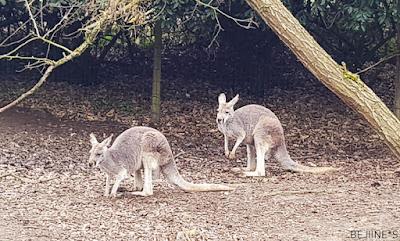 Lumières Sauvages au Zoo Safari de Thoiry