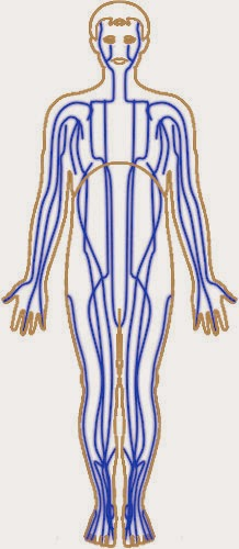 Understanding Meridians in relation to Reflexology, energy lines that run through the body