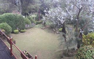 halaman belakang villa luas dan leluasa
