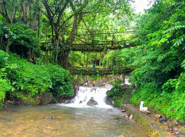 The living root bridges of Meghalaya - one of the best monsoon holiday destinations of India