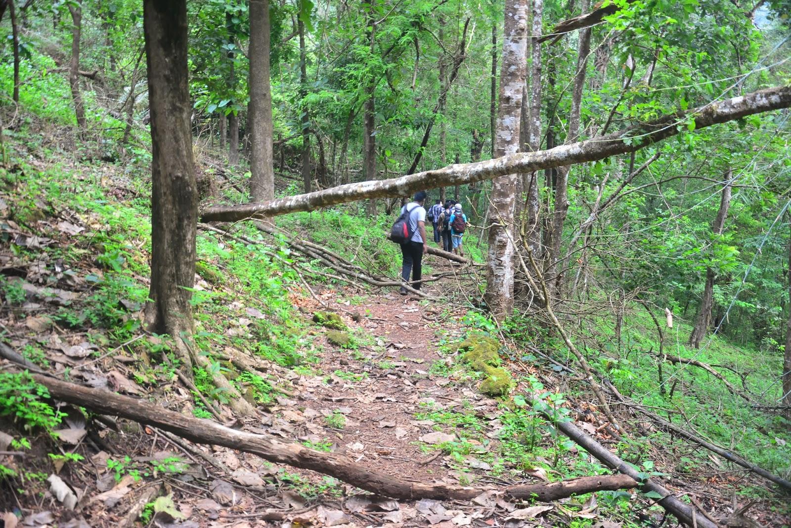 trekking in cochin