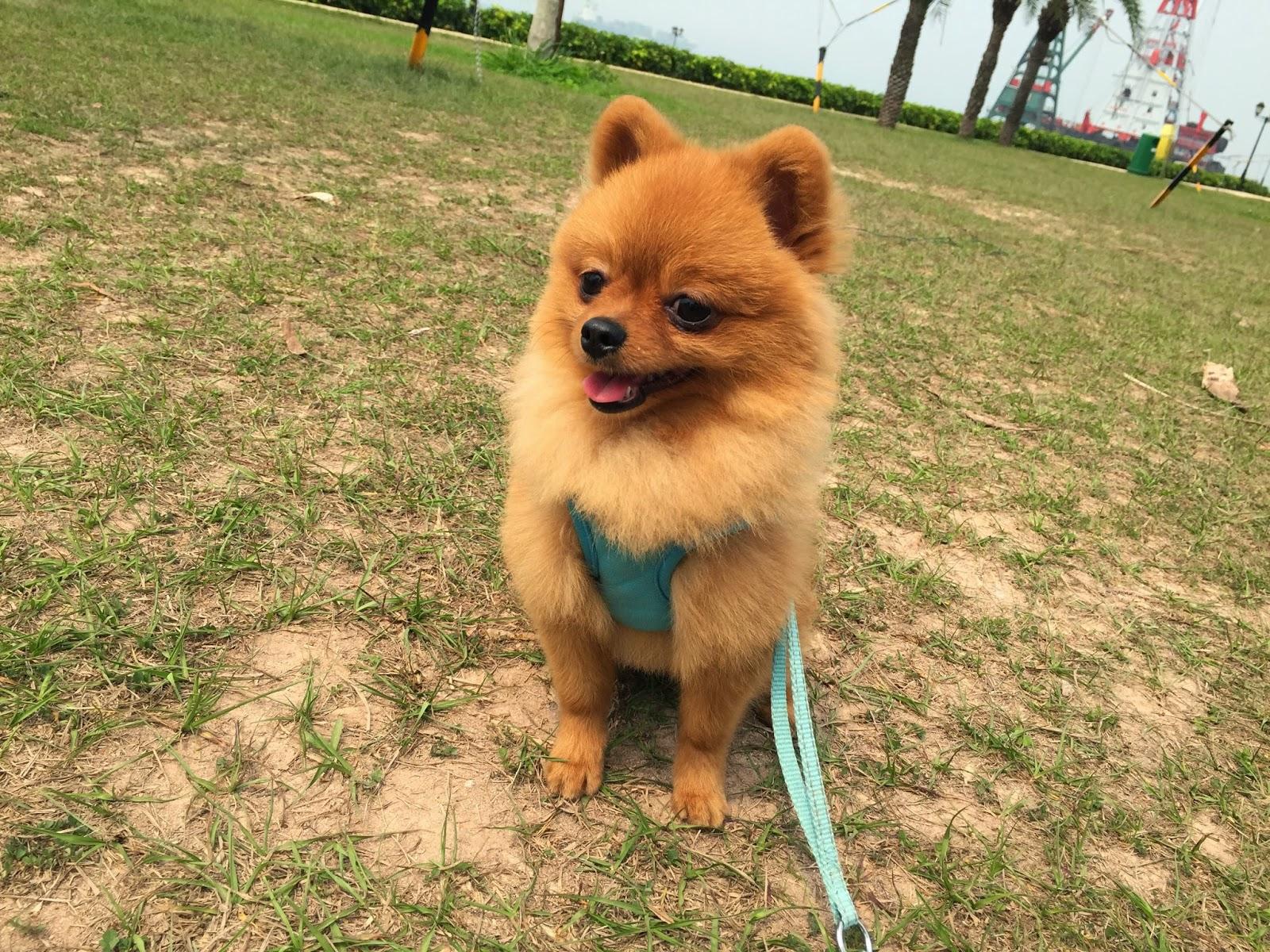 Pets Neverland 狗狗資訊站: 狗狗好去處-港島: 數碼港海濱公園