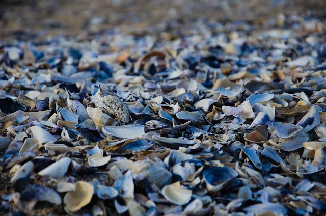 Discarded-by-the-sea-Изхвърлени-от-морето