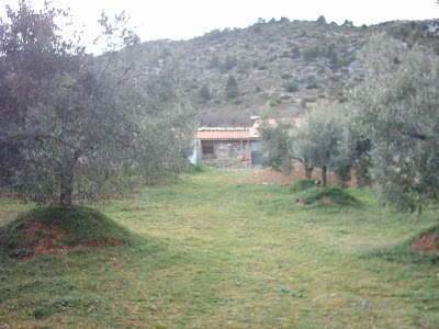 los olivares ,camino ,pantano de Pena, Beceite, Beseit, olivos