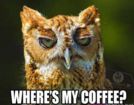 Where is this owl's coffee