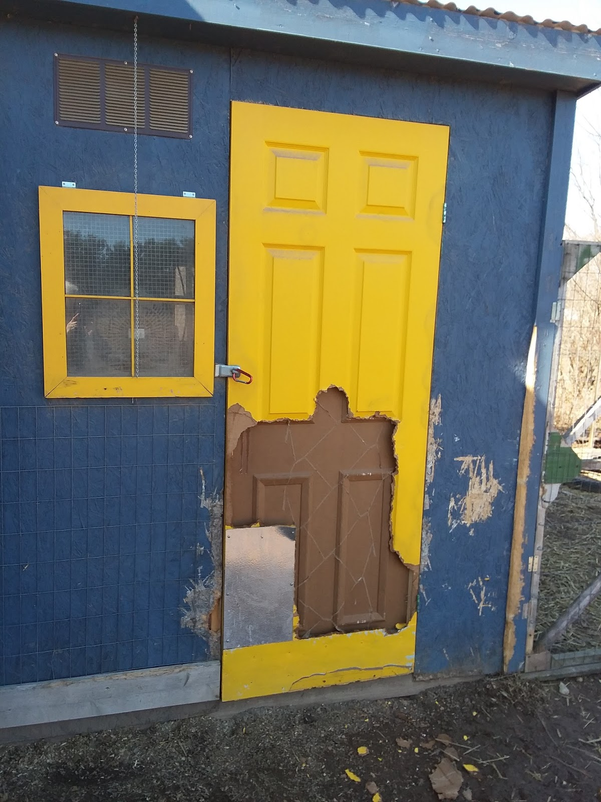 We discovered a couple of days ago that hooligans had vandalized the \ yellow door\  to the chicken coop. Yes it literally happened overnight. & My Miniature Donkeys: February 2018