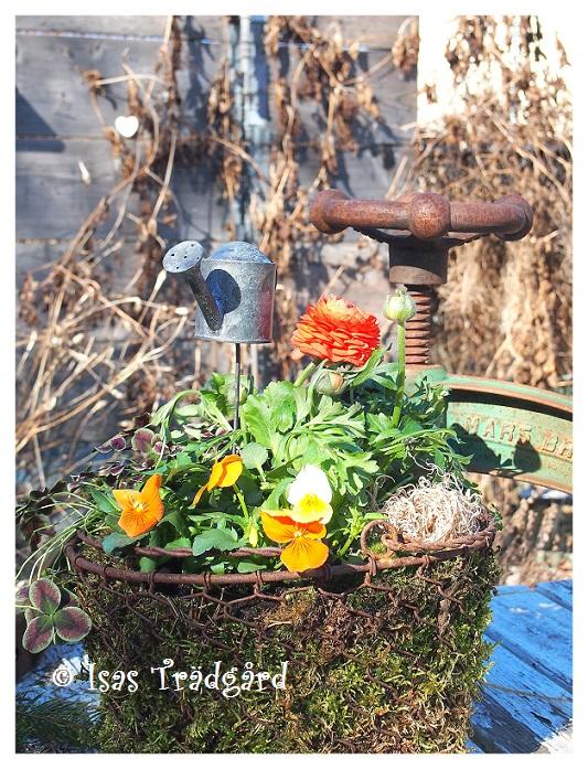 Trädgård O Sånt : Isas trädgård
