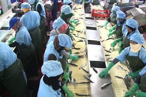 """السرقات وأوضاع العمال """"تُفقران"""" غنى الثروة السمكية بالداخلة"""