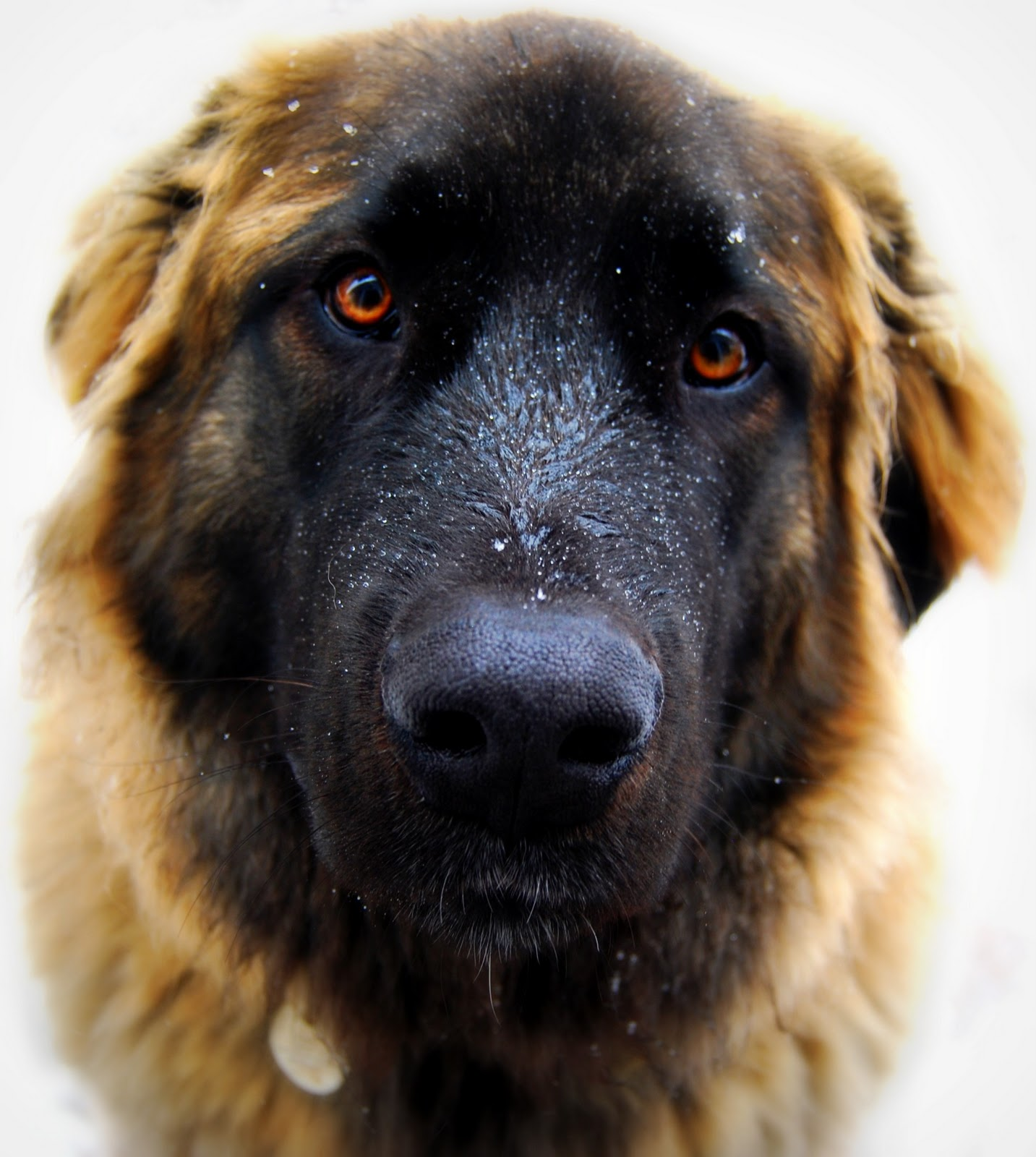 Idea Bathroom Special K A Photo Blog Leonberger Love