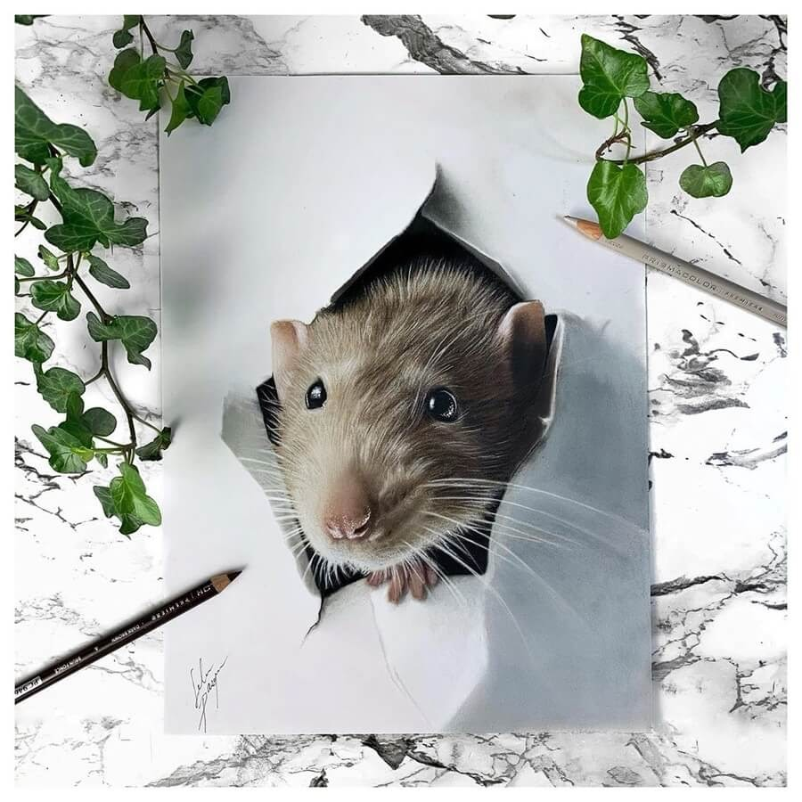02-Surprise-Brown-Rat-Solene-Pasquier-www-designstack-co