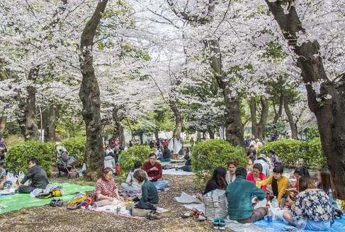 Tips Travelling Musim Semi Di Jepang Kulinernya